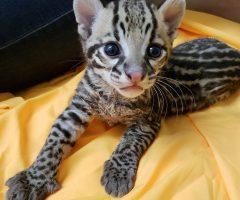 Exotic Zoo Animals